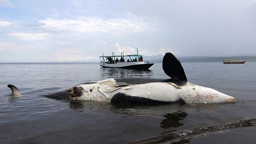 52 Hiu Terdampar di Pantai Madura, Ini Hasil Investigasi KKP