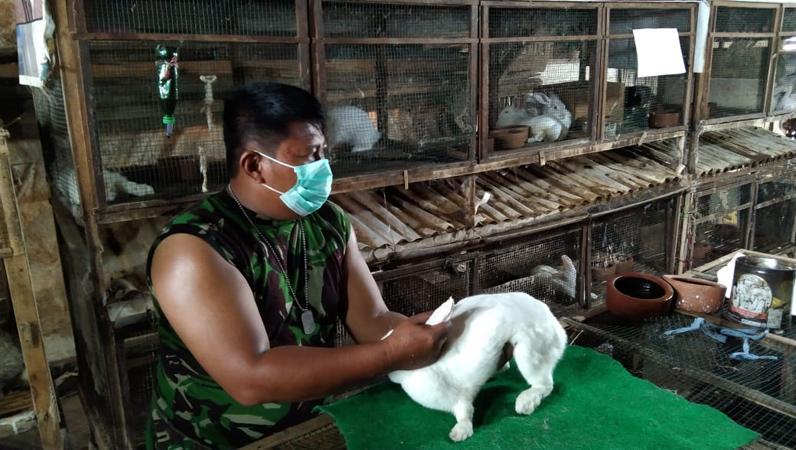 Babinsa Kodim Pekalongan Ini Sukses Ternak Kelinci Hias, Omset Jutaan Rupiah per Bulan