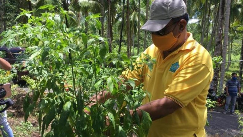 Harga Cabai di Kepulauan Sangihe Naik Drastis, Rp110.000 per Kg