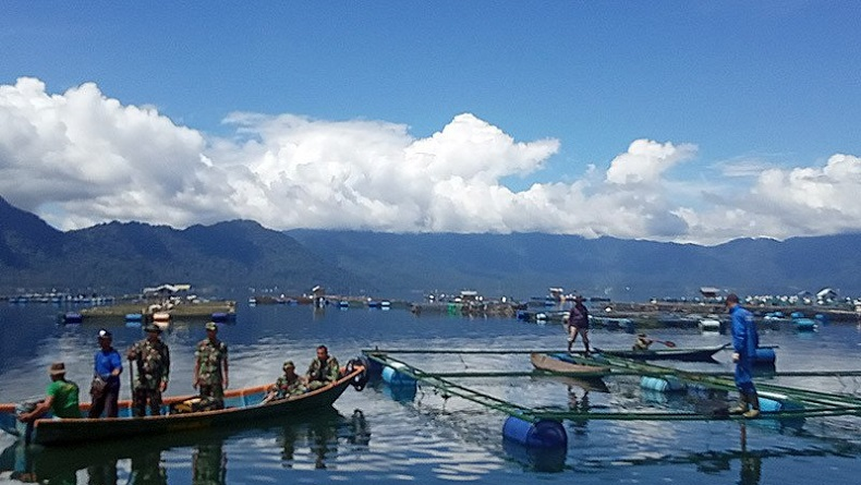 Petani Merugi, 5 Ton Ikan di Danau Maninjau Mati karena Curah Hujan Tinggi