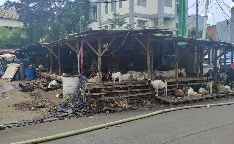 Kebakaran Usai, Sebagian Pedagang Pasar Kambing Tanah Abang Kembali Berjualan
