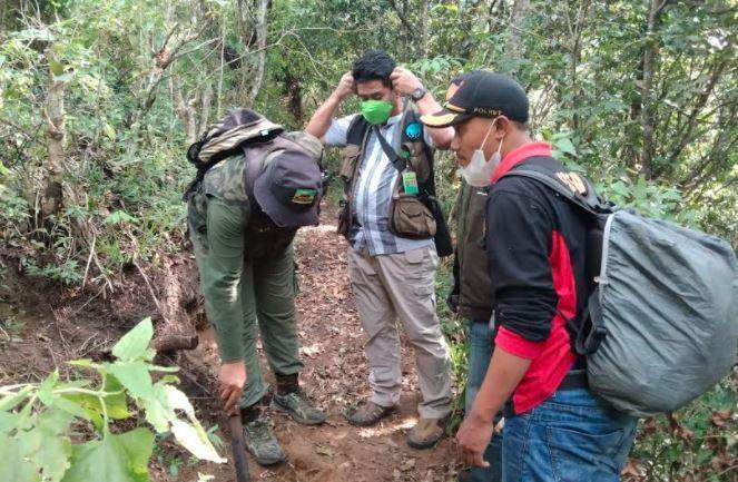 Diburu dengan Anjing, Lutung Jawa Ditemukan Tinggal Ekor di Gunung Butak Malang