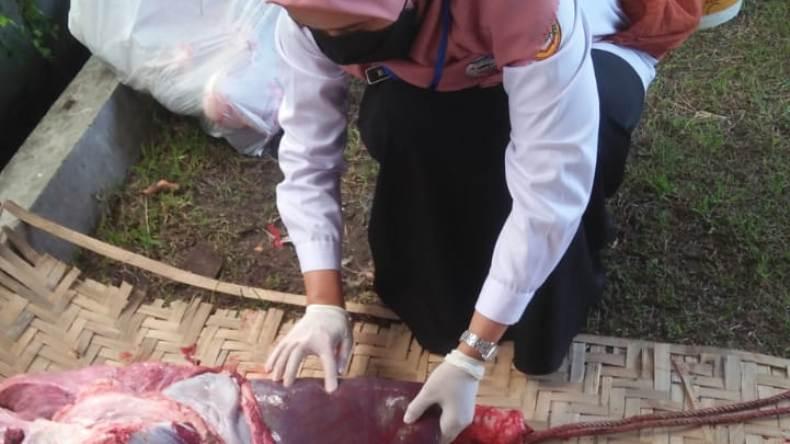 Awasi Penyembelihan Hewan Kurban, Pemkab Sukoharjo Antisipasi Adanya Cacing Hati