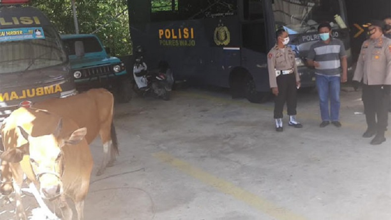 Polisi Tangkap Komplotan Pencuri Ternak, 40 Sapi Berhasil Dibawa Kabur
