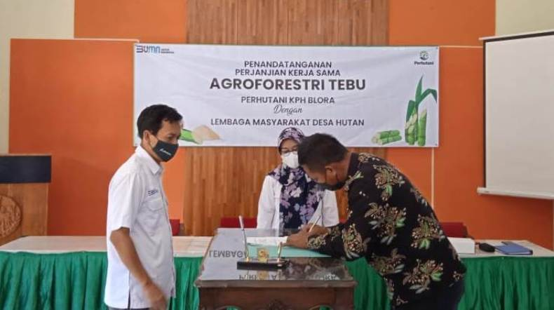 Perhutani KPH Blora Sediakan 222,78 Hektare untuk Agroforestry Tanaman Tebu