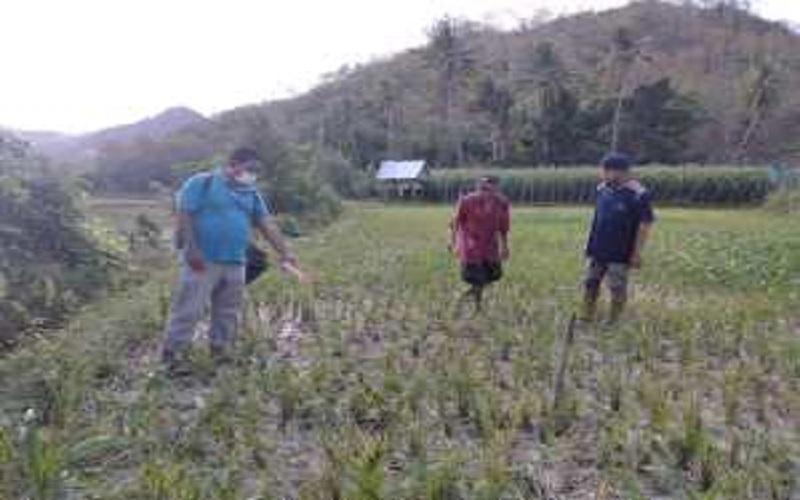 Warga Desa Campa Bima Digegerkan Penemuan Mayat di Sawah
