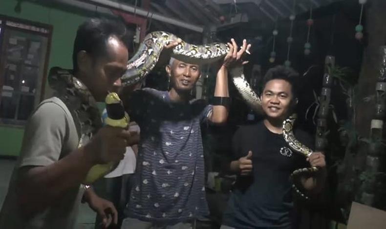 Jepara Geger, Ular Sanca Sepanjang 3 Meter Teror Perkampungan Mulyoharjo
