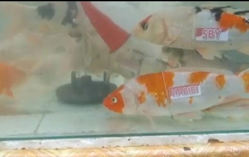 Meriahkan HUT ke-76 Kemerdekaan RI, 7 Ikan Ini Diberi Nama-nama Presiden RI