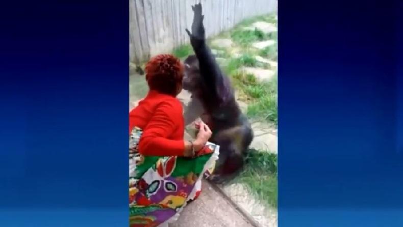 Punya Hubungan Spesial dengan Simpanse, Wanita Ini Dilarang Kunjungi Kebun Binatang