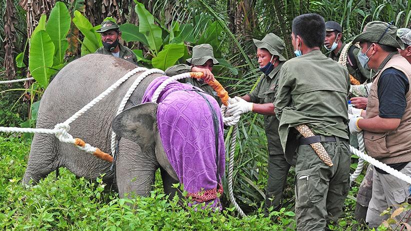 Hindari Kawanan Gajah, Warga Pidi Jatuh ke Jurang