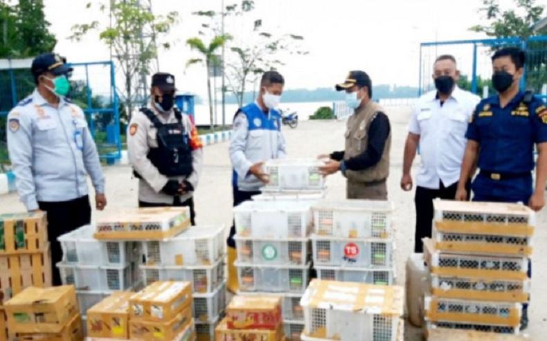 Penyelundupan 2.044 Ekor Burung dari Kobar Digagalkan, Mayoritas Satwa Dilindungi