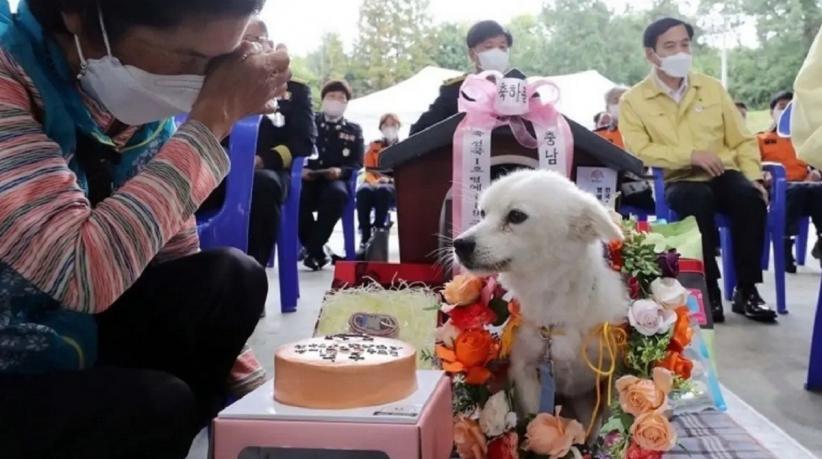 Anjing Ini Selamatkan Nyawa Nenek 90 Tahun, Seperti Apa Kisahnya?