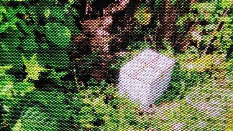 Kota Manado Heboh, Mayat Bayi Membusuk Ditemukan Dalam Kotak Pendingin di Semak-semak