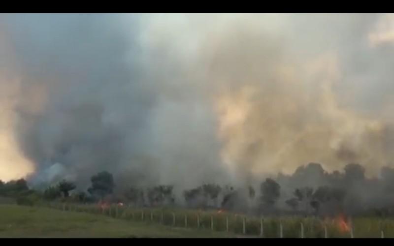 Cegah Kebakaran Hutan, BPBD Segera Pakai Aplikasi yang Diluncurkan Kapolri