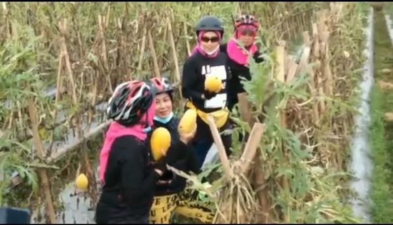 Berkah Pandemi, Petani Buah asal Purwokerto Ini Raih Hasil Melimpah Panen Semangka Golden