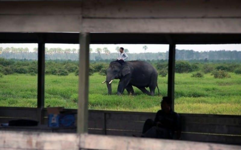 5 Tempat Wisata di Banyuasin Sumatera Selatan yang Wajib Dikunjungi, Nomor 5 Memandikan Gajah