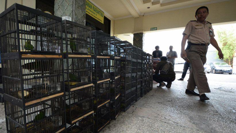 Gondol Burung Murai Batu, Pria di Yogyakarta Terancam Penjara 7 Tahun